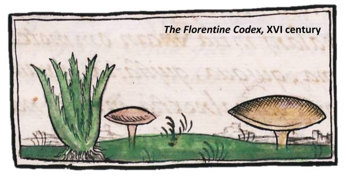 8-codex